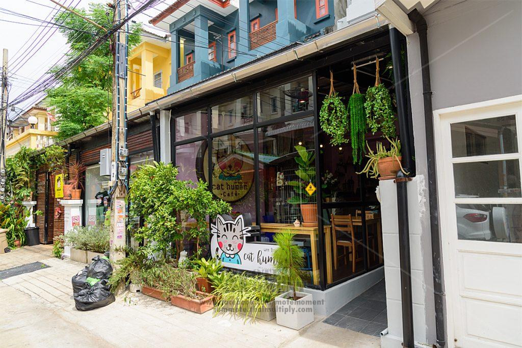 พาเที่ยว Cat Human Cafe ( หลังย้ายร้าน )
